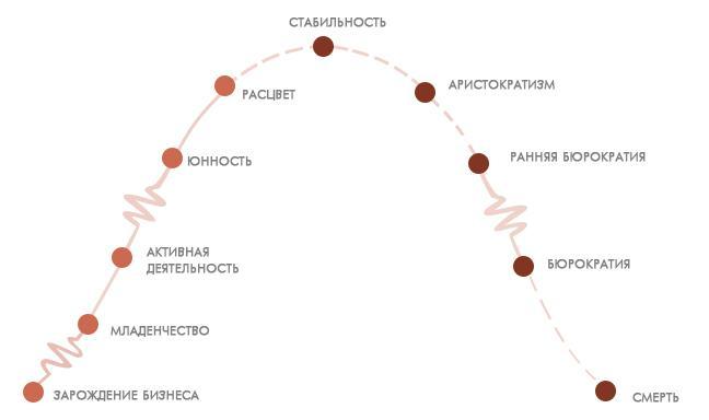 стадии-жизненного-цикла