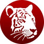 White Tiger Design Studio