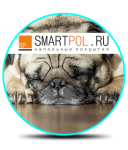 Smartpol.ru - интернет-магазин напольных покрытий в Челябинске